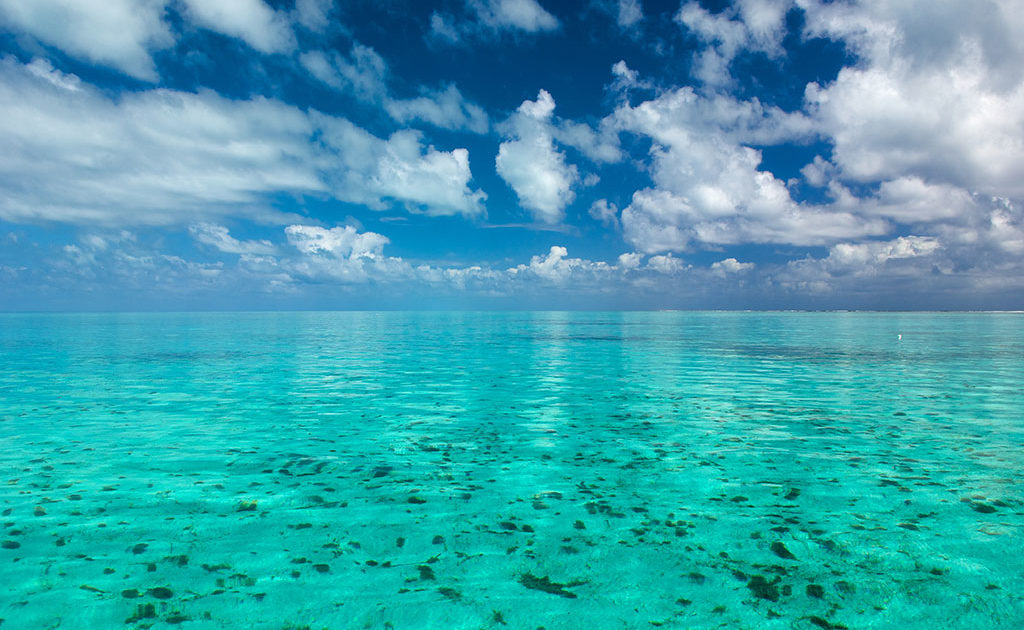 Belize Diving Adventures – Your Diving Expert and Sea Tour Opertaors