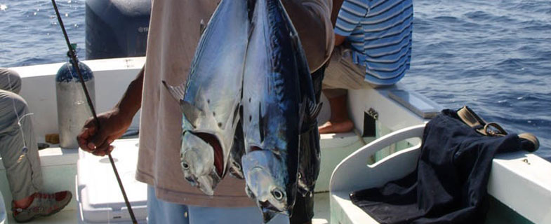 Deep sea fishing belize diving adventures for Deep sea fishing san pedro
